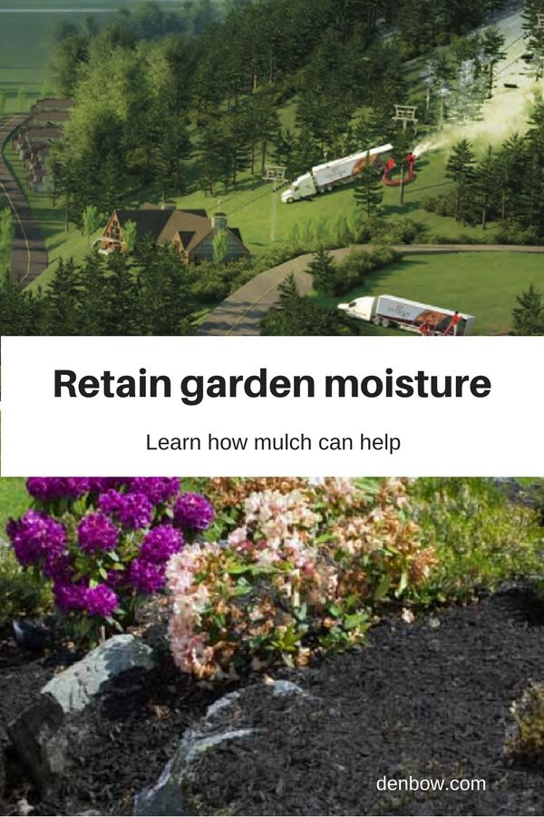 Water retention – Plants with a consistent soil moisture-level are less likely to become stressed and are able to better resist diseases and pests. Visit denbow.com for more on landscaping, gardening, and mulch products.