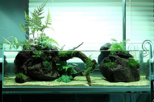Opinions On Ada Horn Wood Planted Aquarium Aquarium Landscape Nature Aquarium