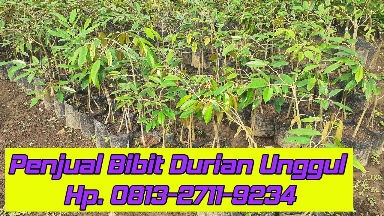 Kebun Durian Unggul Wonogiri Kabupaten Wonogiri Jawa Tengah