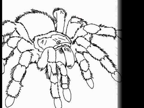 Tarantula Coloring By Cool Findz Com Literasi