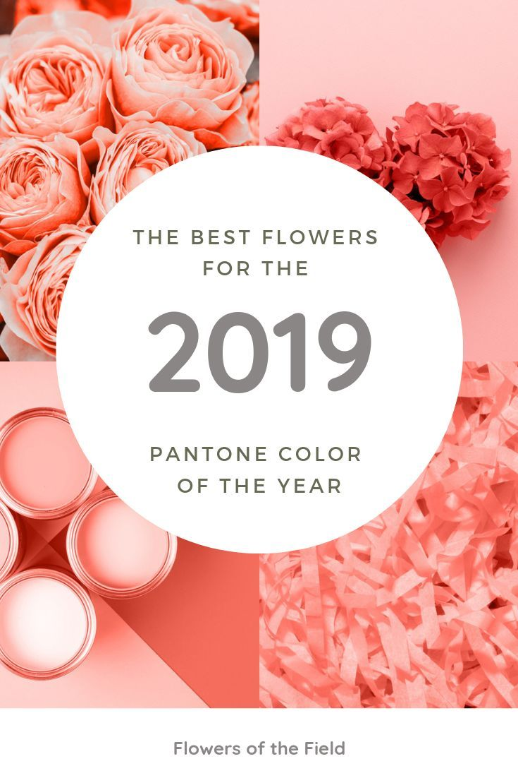 incorporate the 2019 pantone color into your floral needs color of the year farbe des jahres
