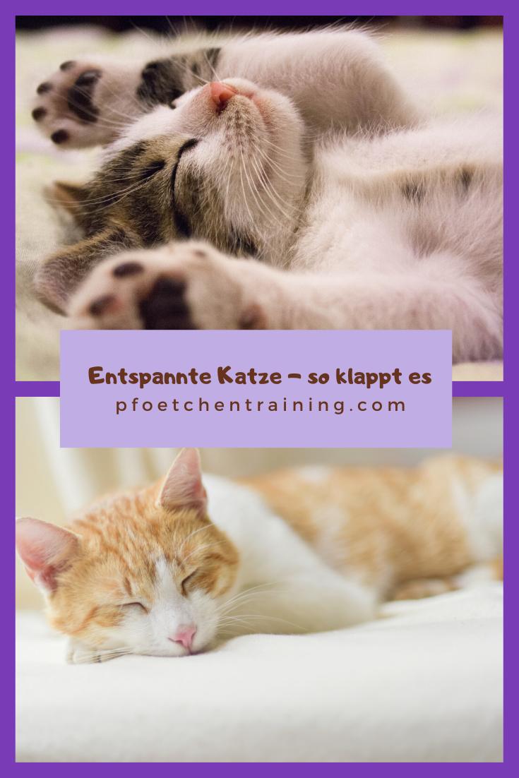 Neuerungen Im Haushalt So Klappt Es Stressfrei Fur Deine Katze In 2020 Katzen