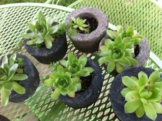 making cement planters: diy project