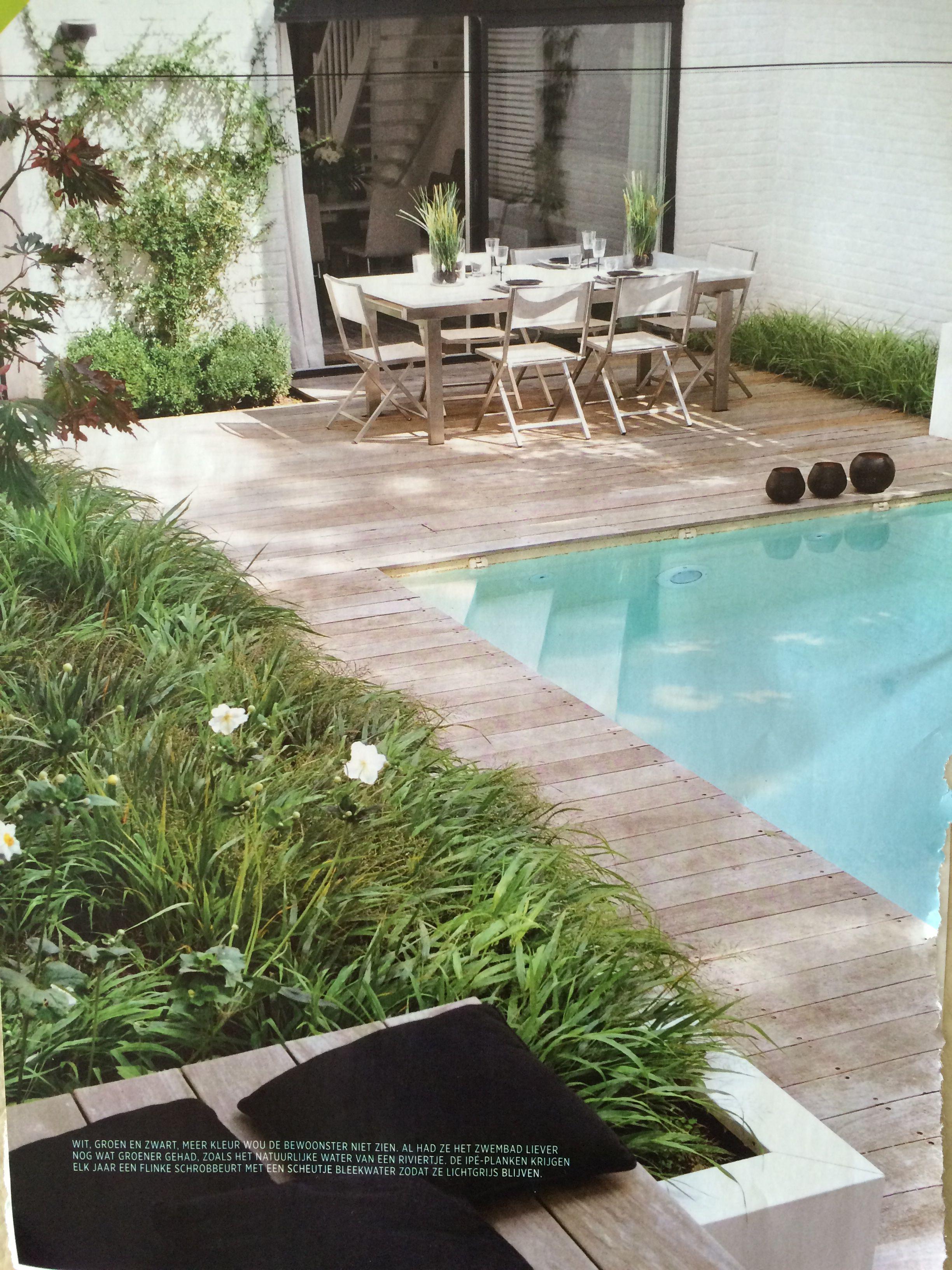 Witte kunststof bakken mengeling van lage grassen zoals carex en hakonechloa en makkelijke vaste planten