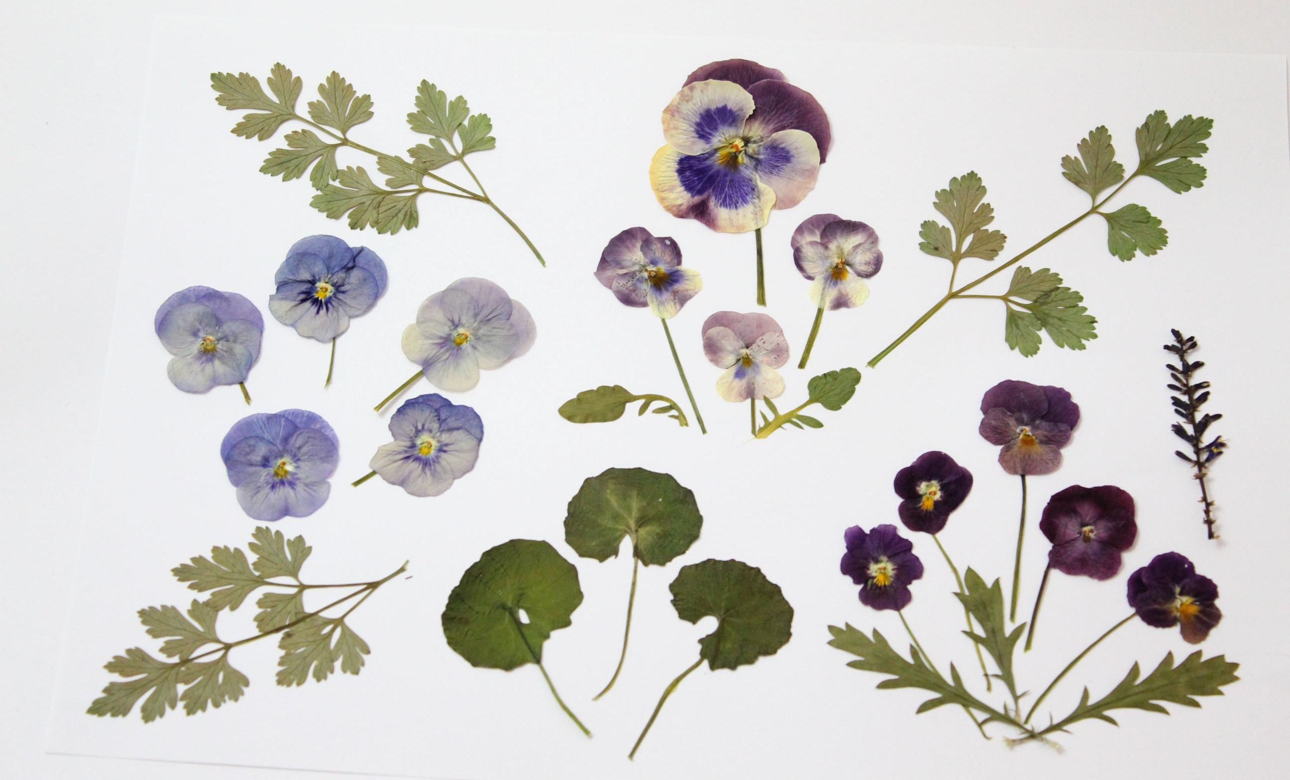 26pcs Mixed Dried Flowers And Pressed Leaves Maiden Hair Etsy In 2020 Flower Supplies Pansies Flowers Dried Flowers