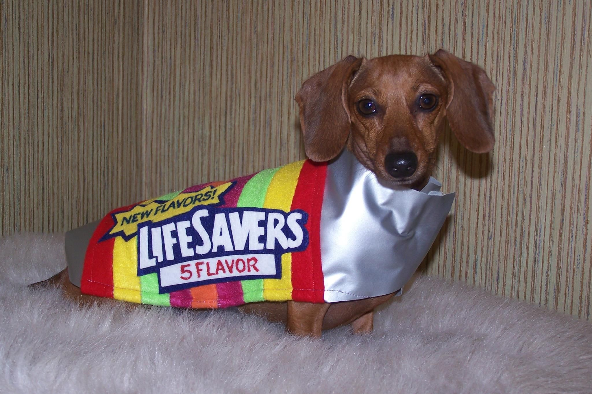 the love of a good dog can be a real lifesaver. | wienermania