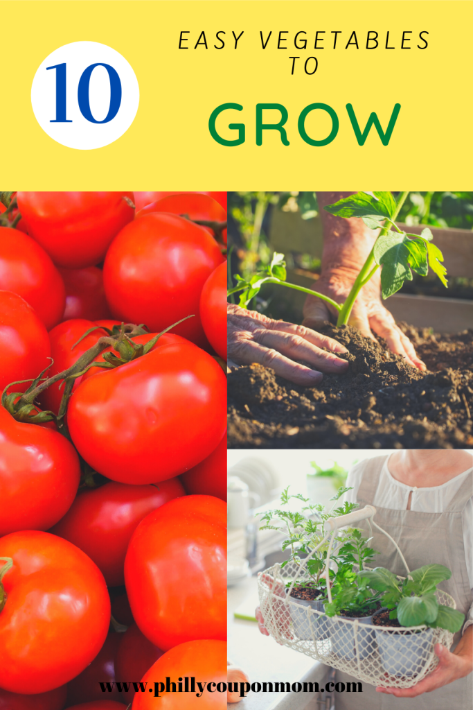 Ten Easy Vegetables to Grow in 2020 Easy vegetables to