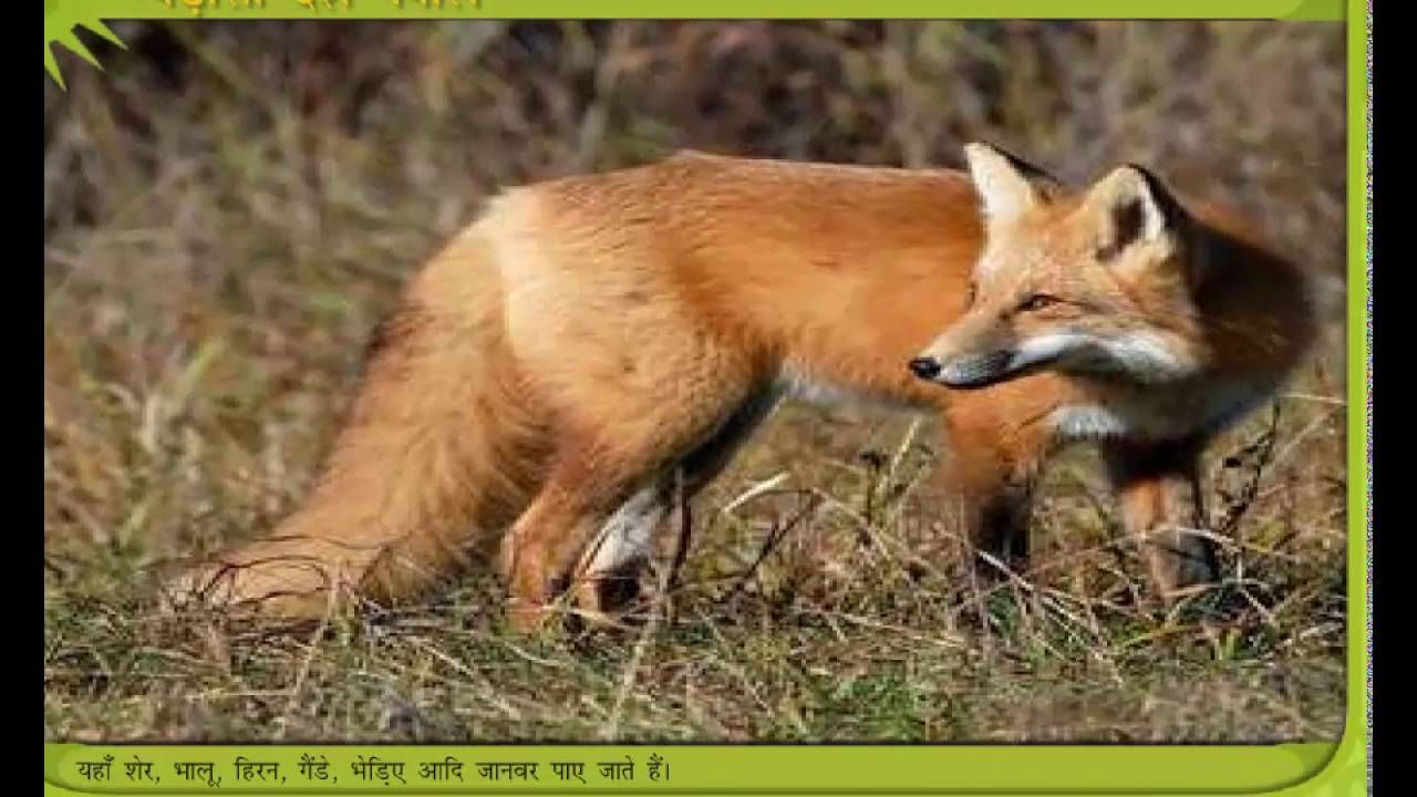 Padosi Desh Nepal Hindi Story Red fox, Fox images, Fox