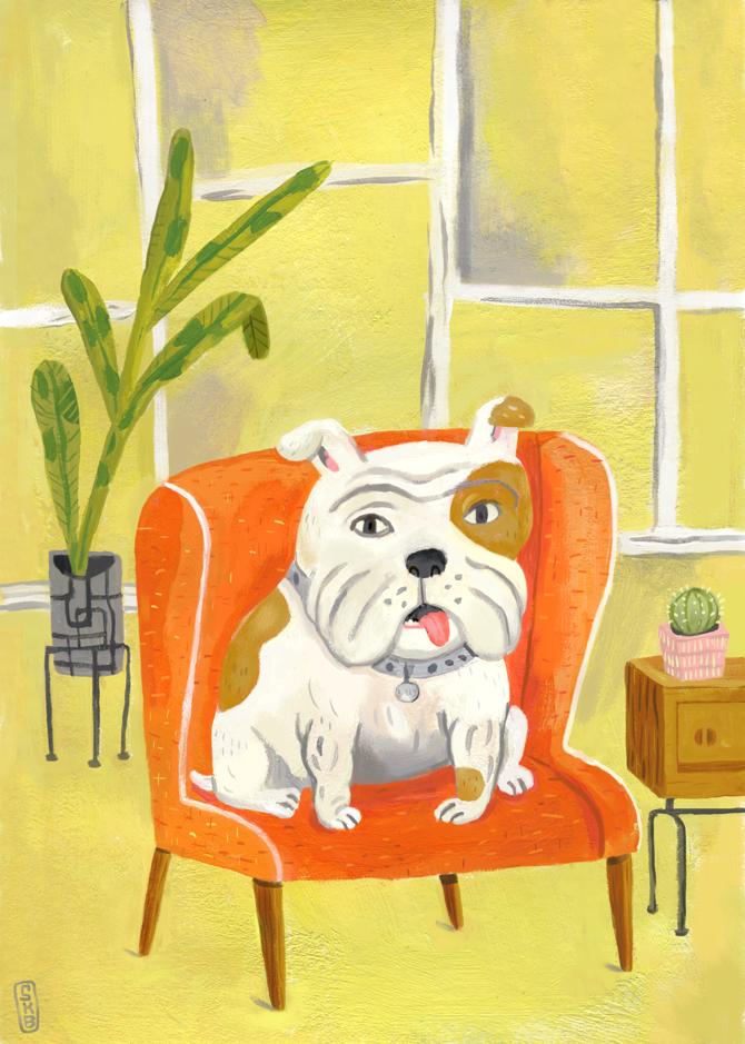 Bully   English Bulldog pet portrait Stephanie Birdsong