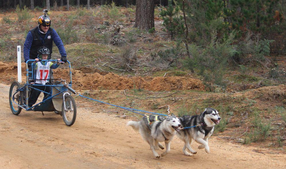 The Joys Of Dog Sledding Dry Mushing Australian Dog Lover