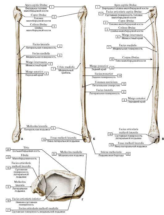 vmede.org sait ?page=2&id=Anatomija_bili4_t1&menu=Anatomija_bili4_t1 ...