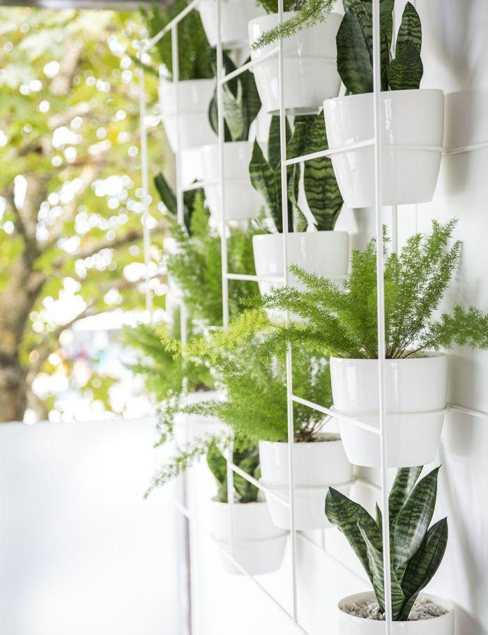 ▷ 1001 + Idées pour votre plante pour salle de bain + ambiances spa