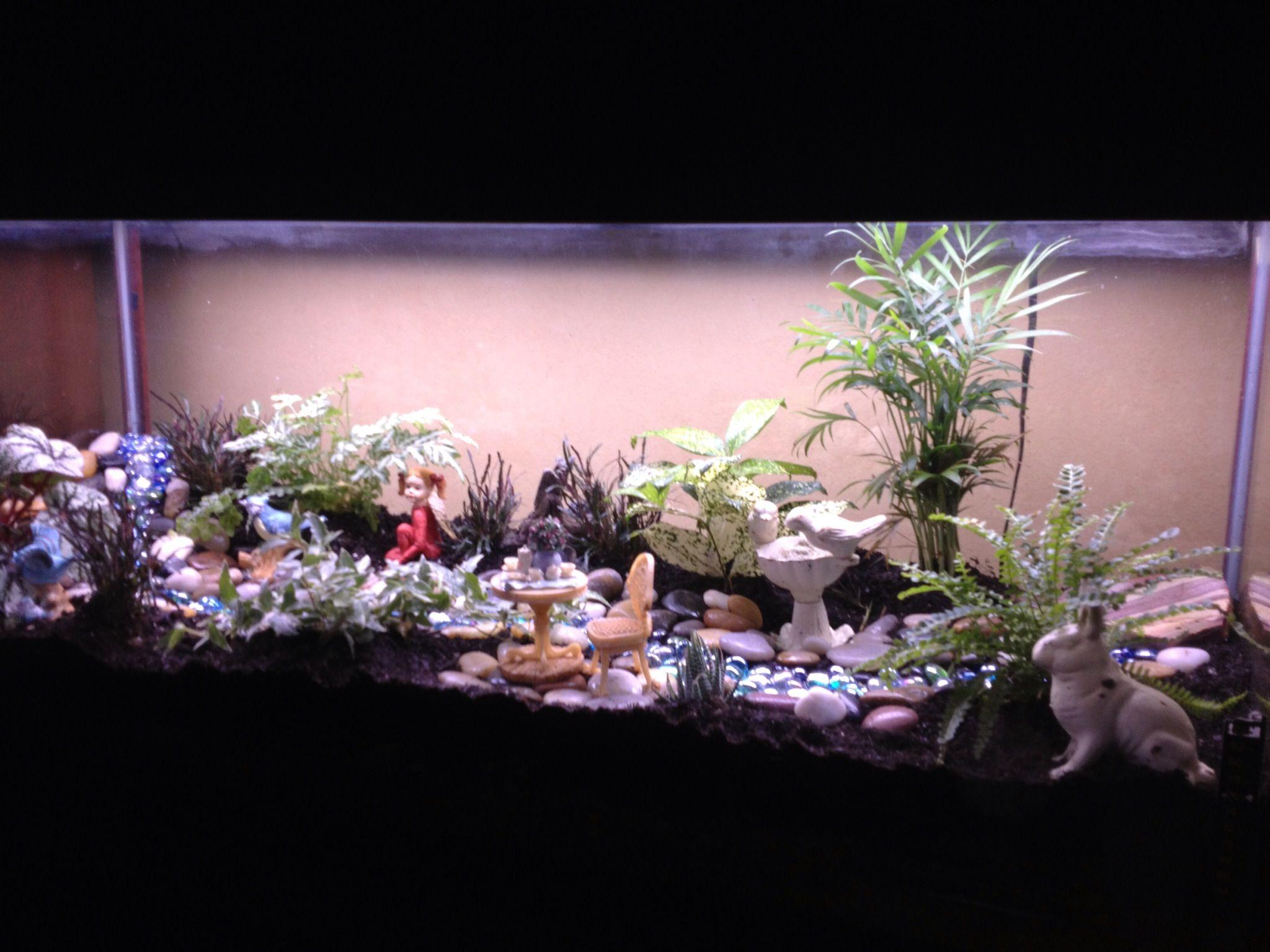 I did it turned my gallon aquarium into a terrariumfairy garden