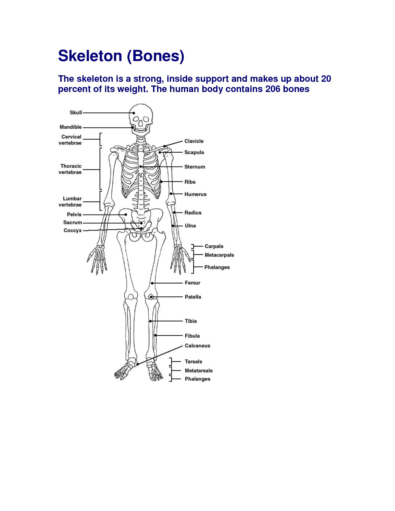 Free Diagrams Human Body | Human Body Bones Diagram ...