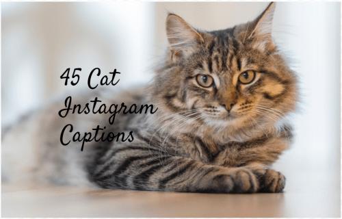 100 Cat Captions for Instagram Meow Cat captions