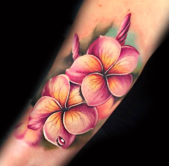 12715268 731334346967968 7695703940548965422 N Tropical Flower Tattoos Frangipani Tattoo Hibiscus Flower Tattoos