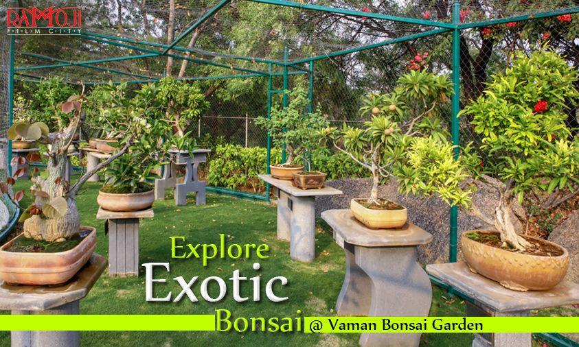 Pin By Ramoji Film City Hyderabad In On Ramoji Film City Bonsai Garden Butterfly Park Plants