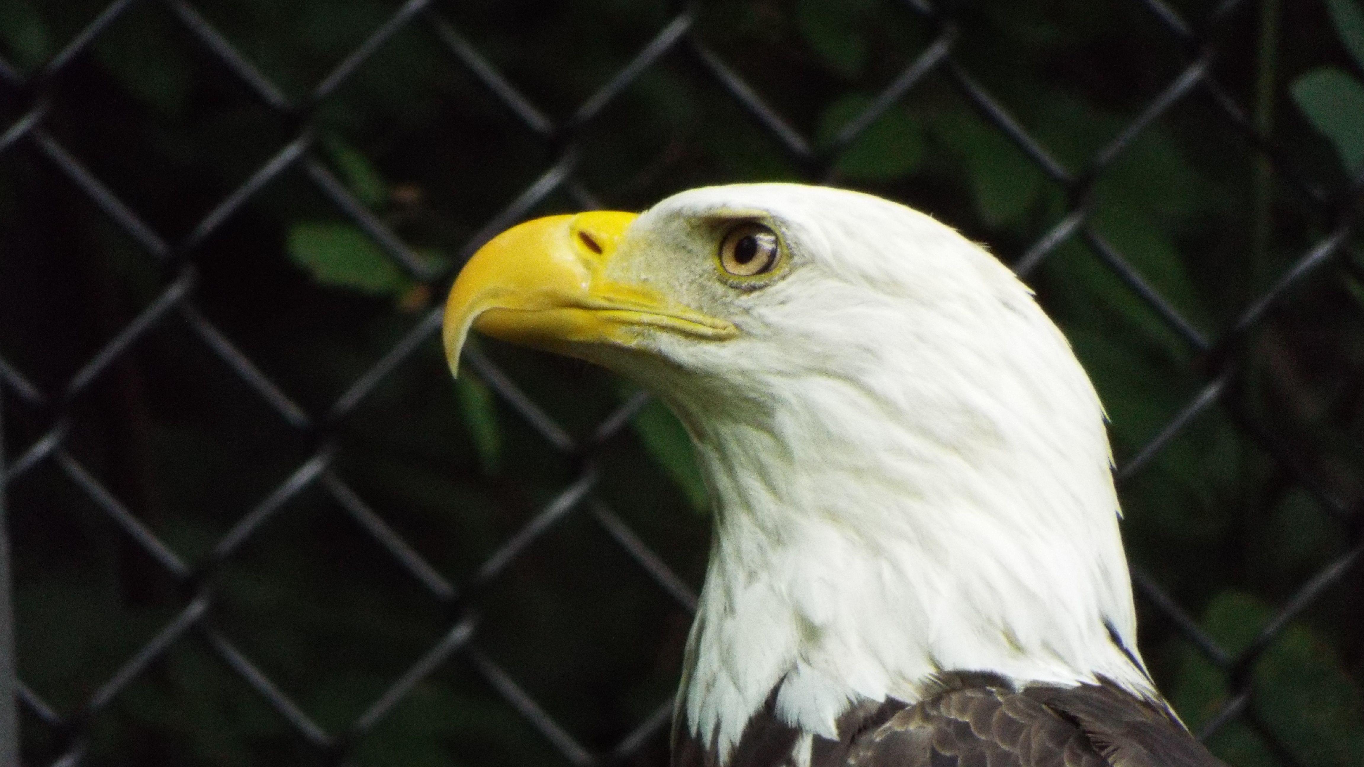Bond Eagle National Symbol My Photos Pinterest Animal