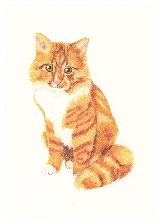 Orange Tabby Art Print Orange tabby cats, White tabby