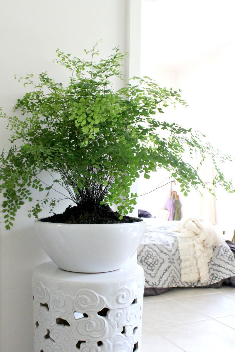 Room ferns: basic plant care 61