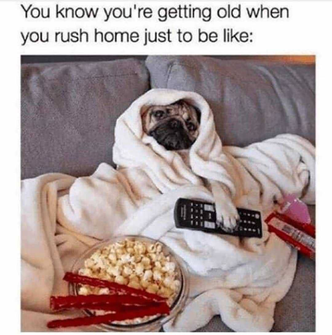 Follow Goodfloofers For More Dog Posts Dogs Dog Dogmemes Memes Memesdaily Dailypost Love Instalove Puppy Pupp Pugs Funny Funny Dog Memes Cute Pugs