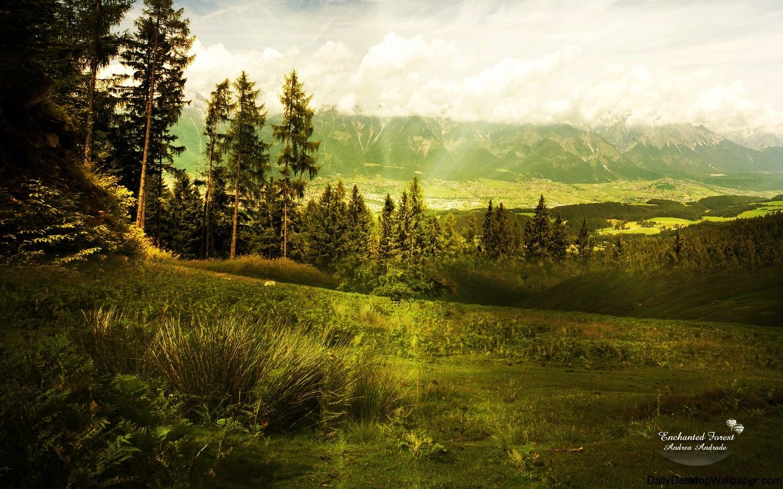 Download Wallpaper High Resolution Forest - fc22460718d0859b165d3a45b87fec53  You Should Have_20440.jpg