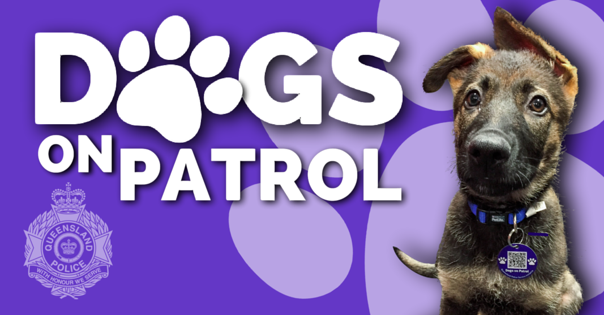 Dogs On Patrol Stafford 2017 May 7 Australian Dog Lover Stafford Dog Dogs Day Out Dog Club