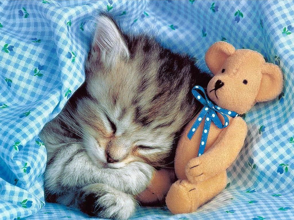 Kitty Goes To Bed With His Cute Teddy Bear Sleeping Kitten Cute Cats And Kittens Cats And Kittens