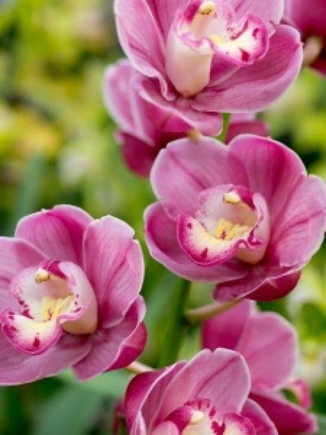 Immagine di http://cdns2.freepik.com/foto-gratuito/fiori-tropicali_21340711.jpg.