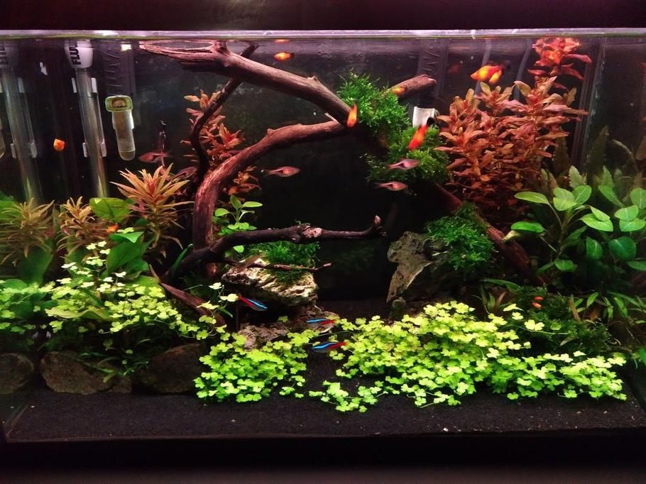 Most Beautiful Freshwater Tanks All Time Ratemyfishtank Com Fish Tank Plants Fish Tank Decorations Aquarium Fish Tank