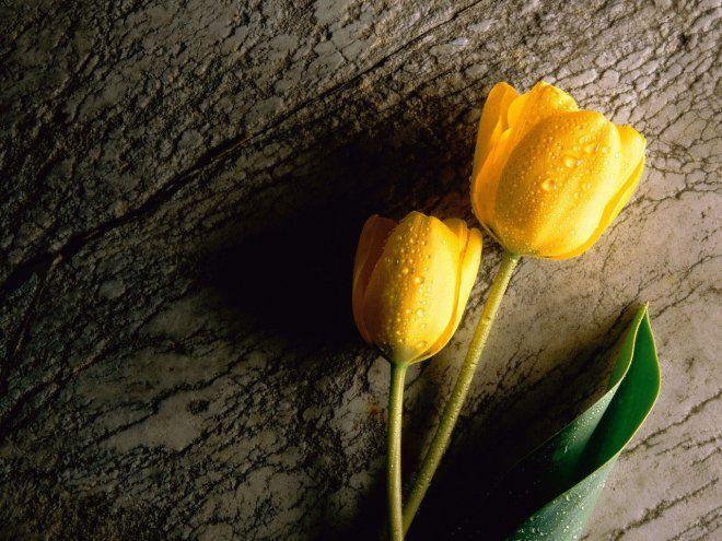 Pin On Flowers Roses Jasmine