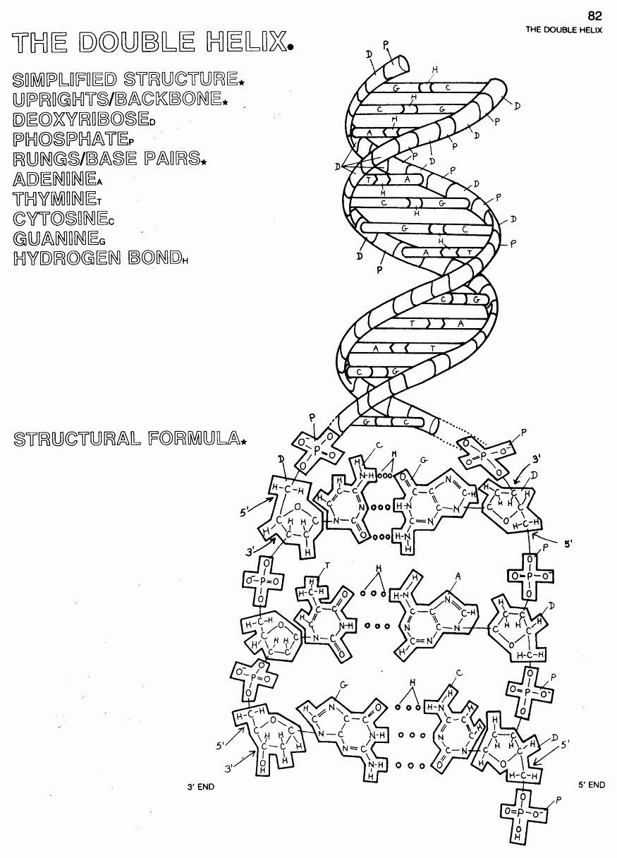 Modern Art Coloring Book Awesome Special Concept Dna The Double Helix Coloring Worksheet Coloring Books Coloring Pages Double Helix