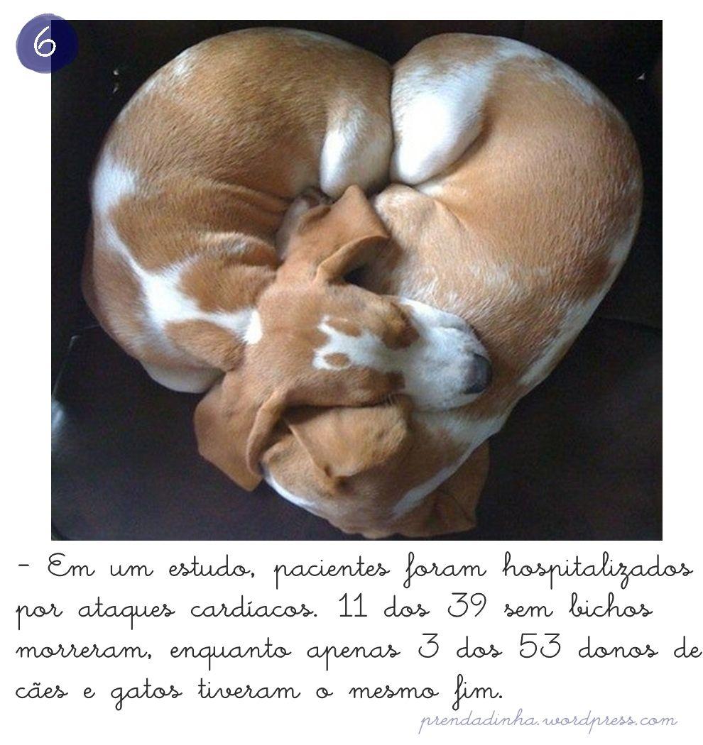 cachorro faz bem pro coração