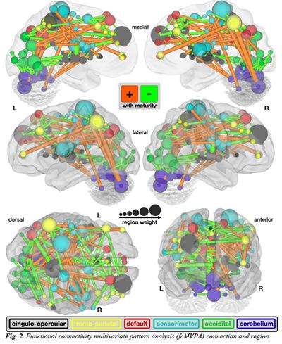 Dr. Fair and colleagues Dr.Dosenbach and Dr. Schlaggar develop method to approximate brain maturity with fMRI