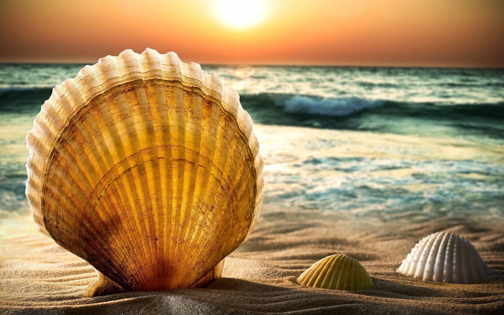 sunset beach nature sea - photo #34