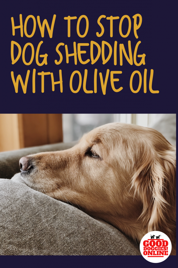 How To Stop A Dog From Shedding Using Olive Oil Animals