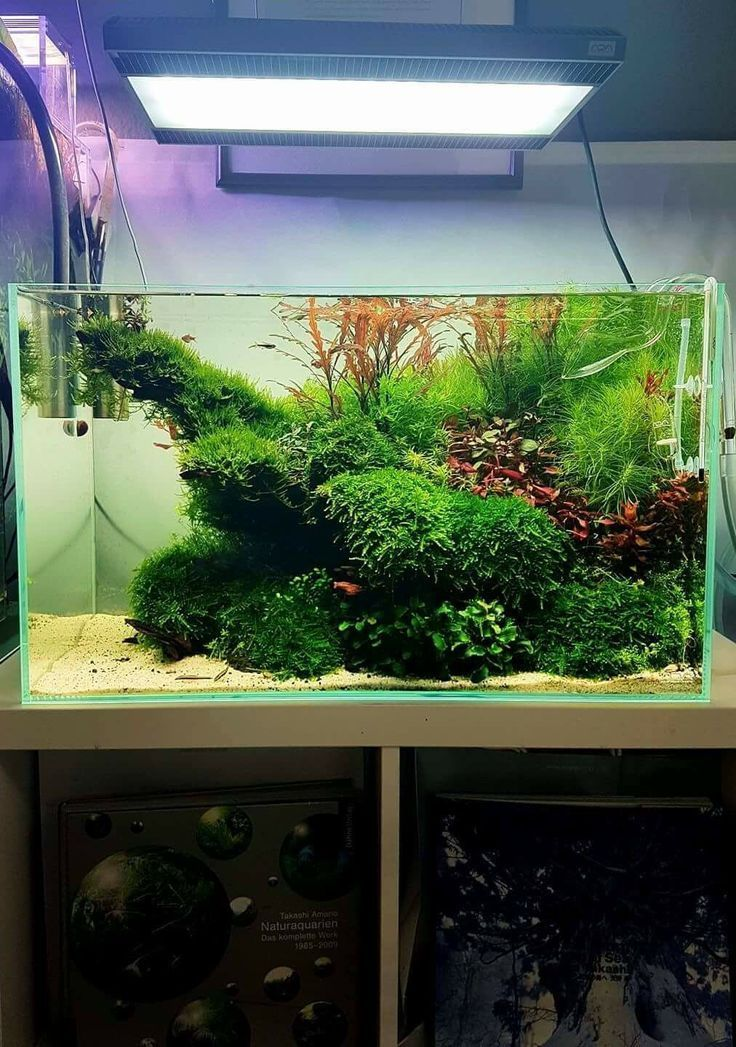Best Aquascaping Design Ideas to Decor Your Aquarium ...