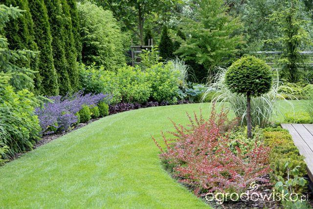 Ogrod Z Lustrem Boxwood Garden Conifers Garden Backyard Garden