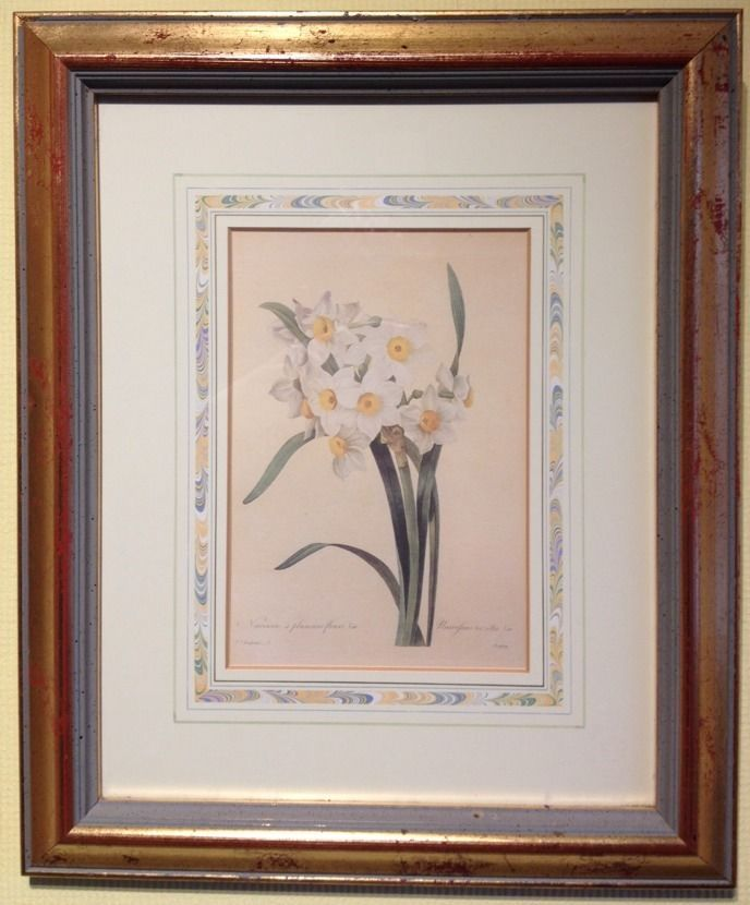 Rare Limited Ed  Print Natural History Museum Fairest Flowers Redoute Narcissus