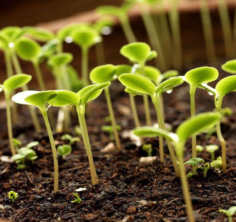 Unbelievable Hydrogen Peroxide Uses In Garden You Should
