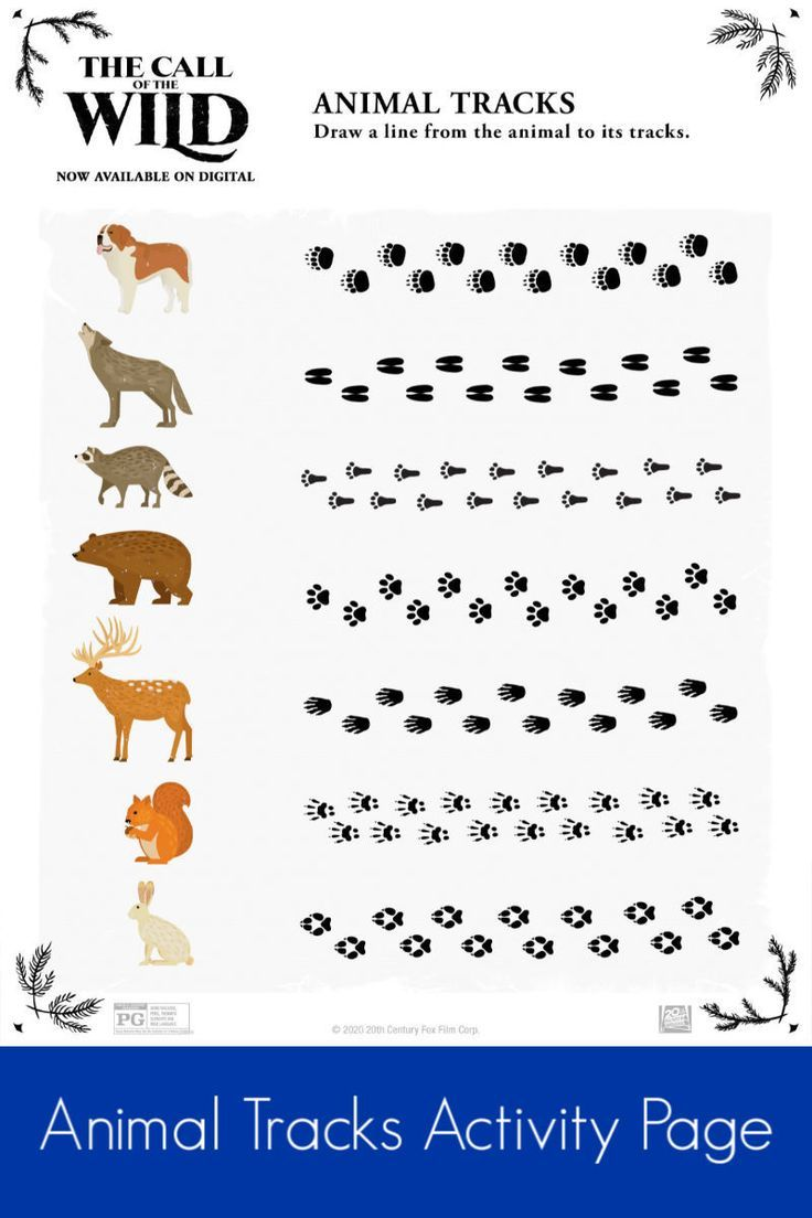 Animal Tracks Activity Page in 2020 | Animal tracks ...