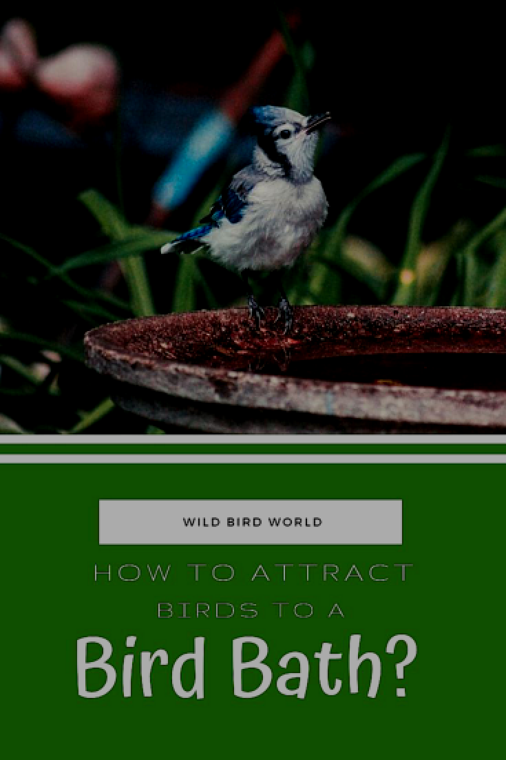Attracting birds to a water bath is very easy if you offer them a sheltered, clean and colorful water bath. Place your water bath beside trees and in shaded areas for the best effect. Be wary however of your water bath freezing in the winter time, consider buying yourself a heated birdbath! #bird #animals #birdfeeder #nature #yard #garden #home #wildlife #hummingbird #owls #woodpeckers #eagles #hawks #turkeys