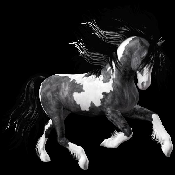 White Black Horse PNG Clipart Picture | gif zvieratká | Pinterest ...