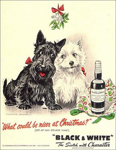 Black And White Whisky Poster Christmas Scottish Terrier Puppy Scottish Terrier Vintage Dog