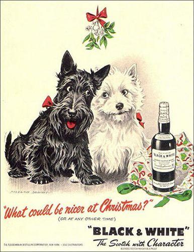 Black And White Whisky Poster Christmas Scottish Terrier Puppy Scottish Terrier Vintage Dog