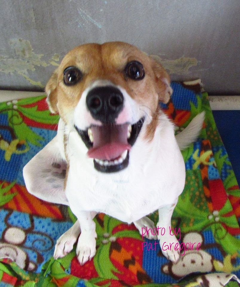 White Brick Baldwin Park S Design: A4754326 My Name Is Chingy. I Am An Adorable And