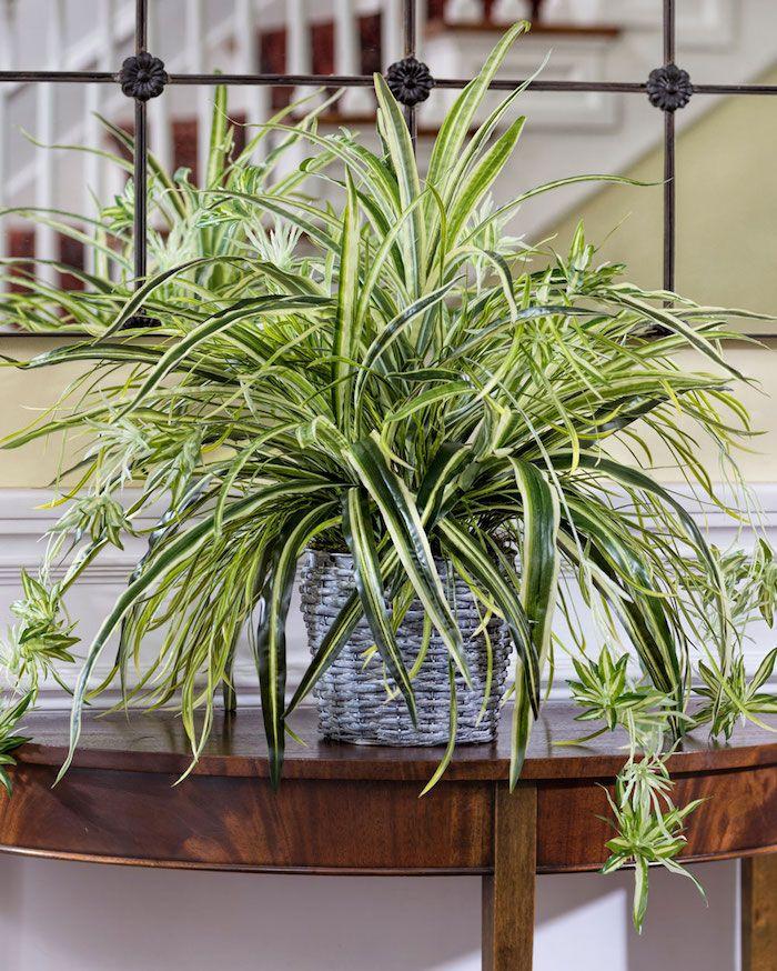 ▷ 1001 + Ideen für Zimmerpflanzen für wenig Licht | Container gardening