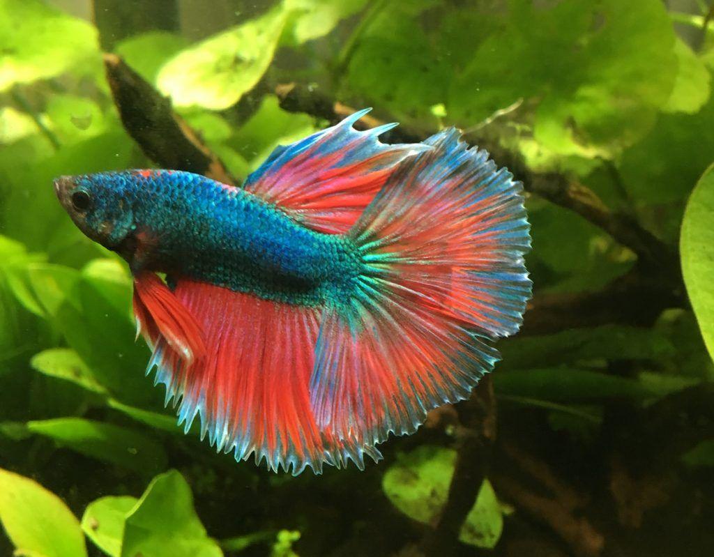 Hübsche Fische