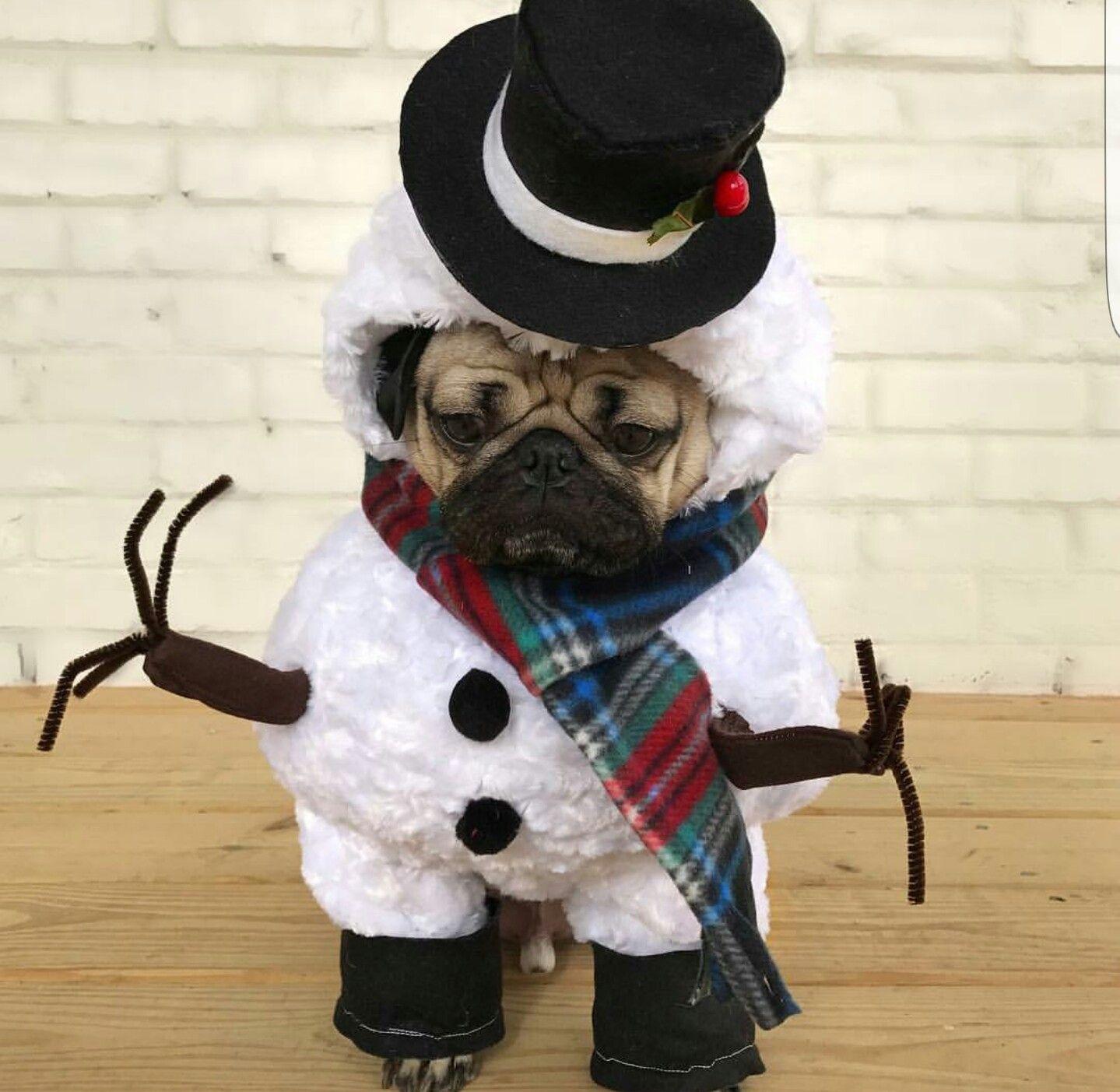 Snow Pugg
