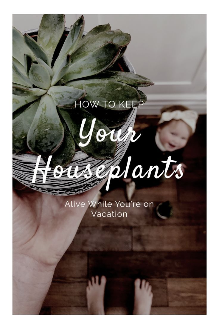 How to keep houseplants alive while youre on vacation